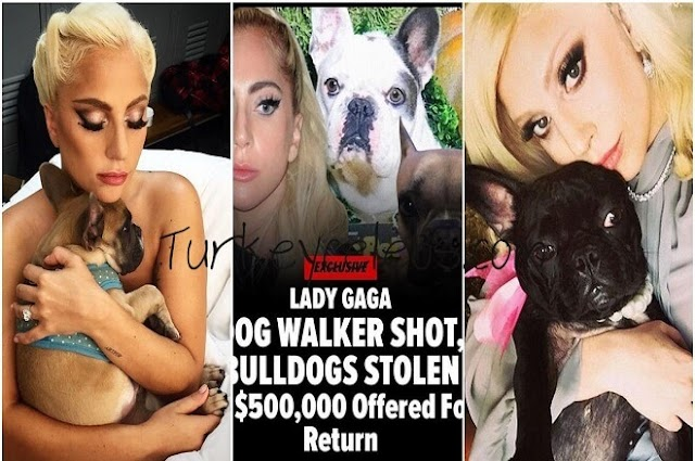 The Lady Gaga dog walker shot, French bulldogs robbed in Hollywood.