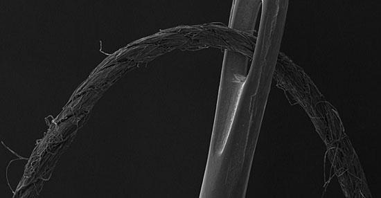 As coisas mais bizarras que você sempre quis ver no microscópio - Linha e agulha