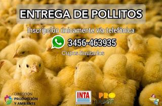 Federación amplia la huerta familiar, entregaran pollitos BB