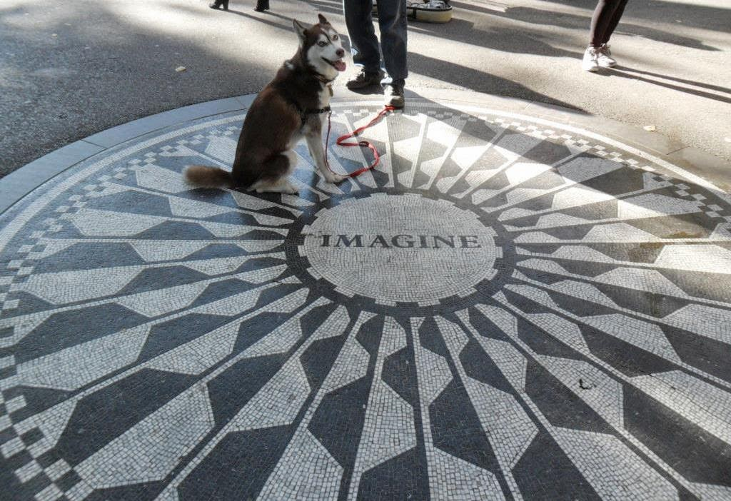 The Imagine Circle in New York City's Central Park is a tribute to the late, great John Lennon of the Beatles rock group sensation.  Dog Friendly Central Park, Dogs