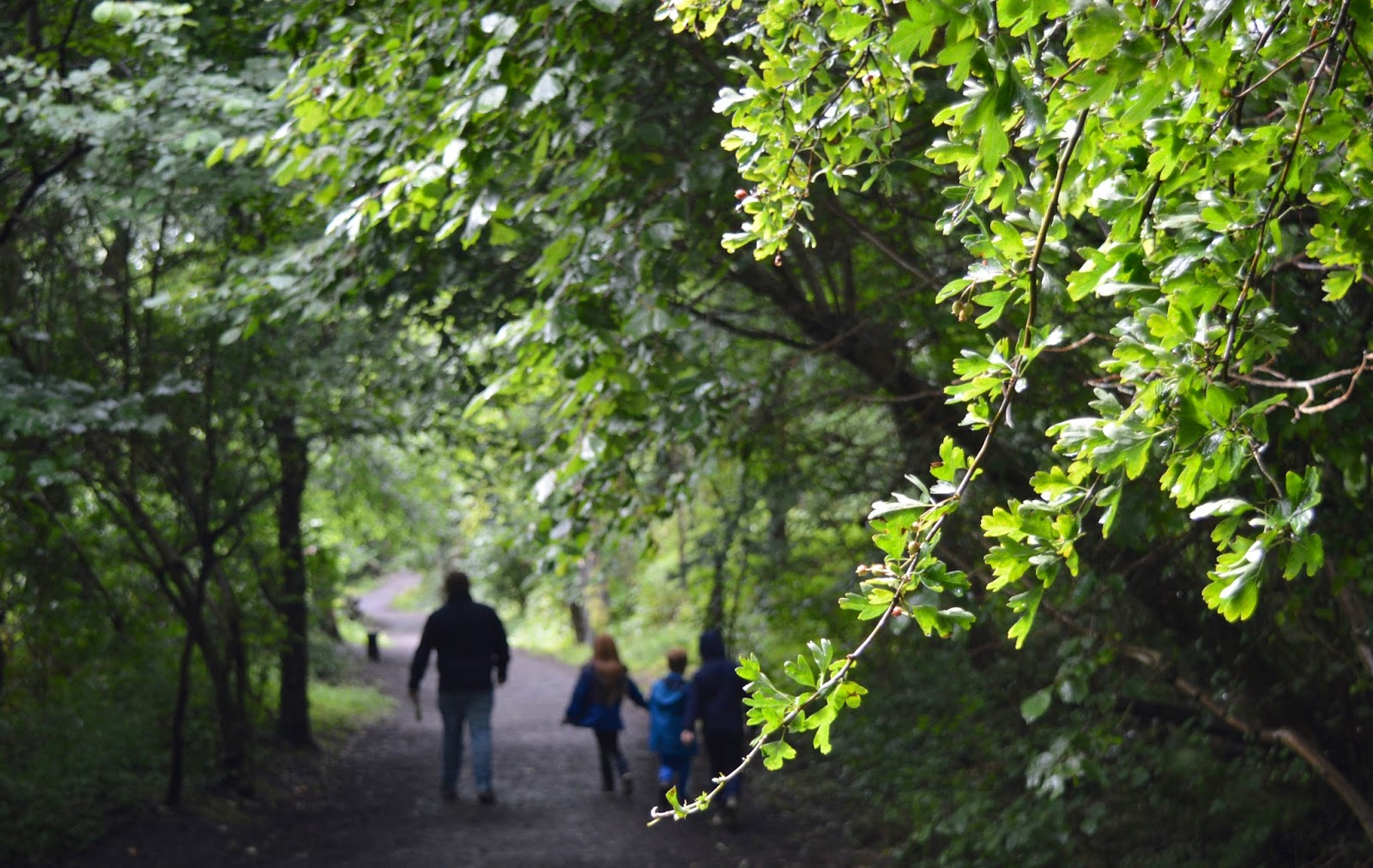 10 of the best family walks in North East England with a cafe and play park nearby - Thornley Woodlands