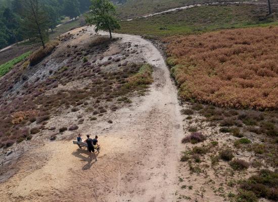 Foto cover Gevolgen van de droogte van 2018 voor de vegetatie van natuurgebieden op de Hogere Zandgronden van Nederland