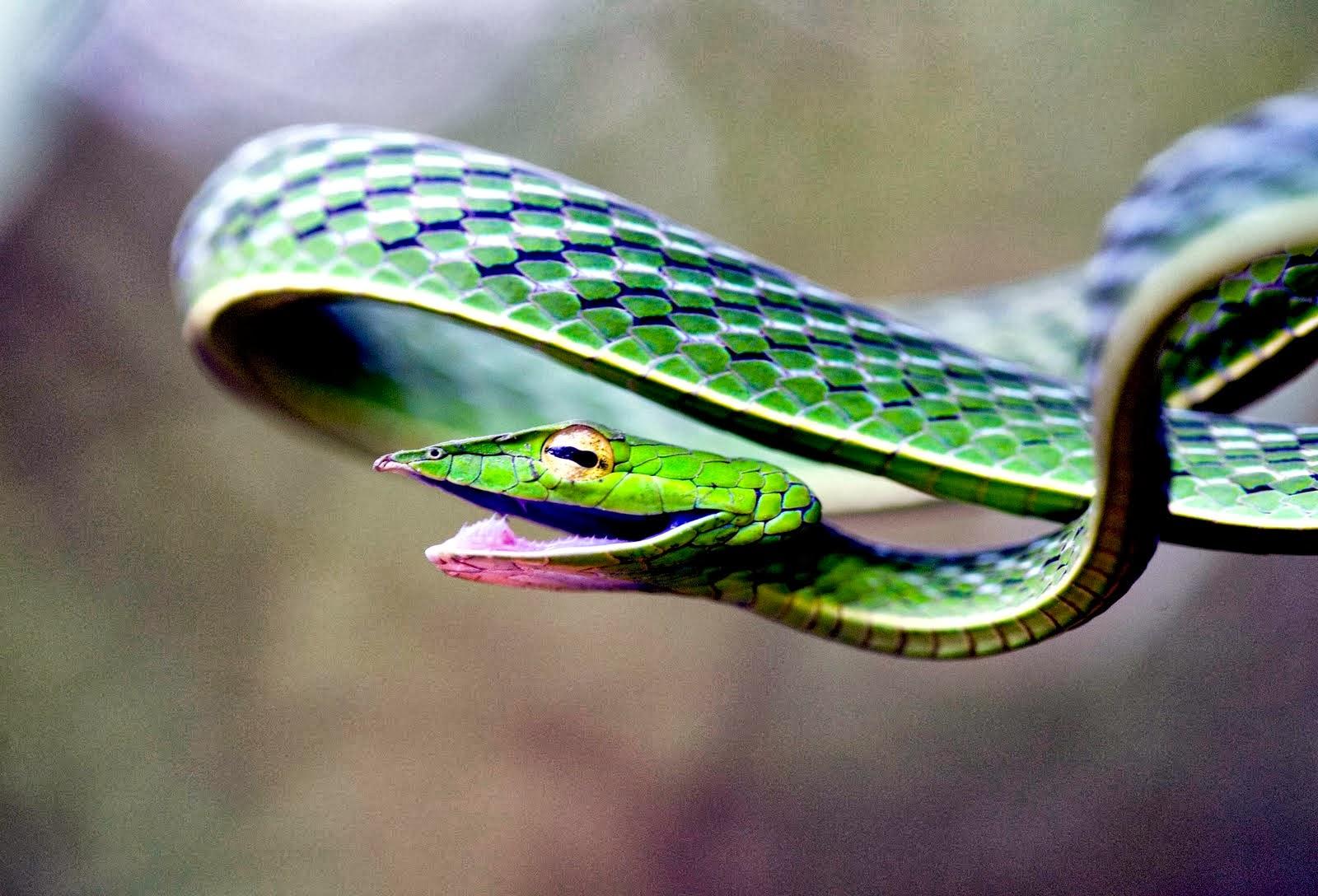 Amazing World  Fun Vine Snake