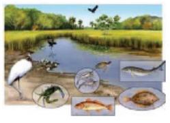 بيئة مائية