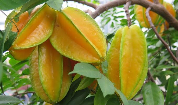 ¿Conoce usted esta fruta? Controla la diabetes, reduce el colesterol, combate la hipertensión y más