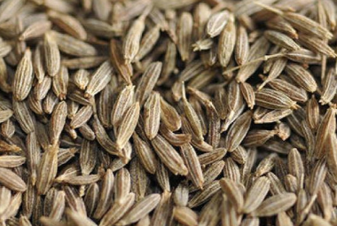 Cumin SeedsJeera for a Treatment of Skin Disorders