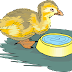 An Interesting Children Story – The Ugly Duckling