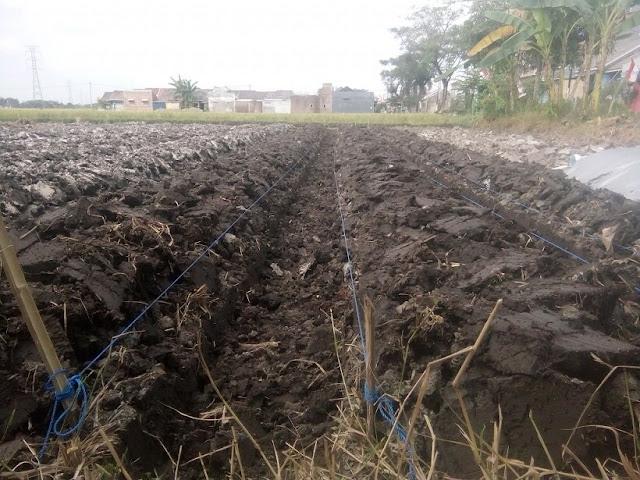 https://tipspetani.blogspot.com/2019/12/cara-menyuburkan-lahan-tanah-pertanian.html