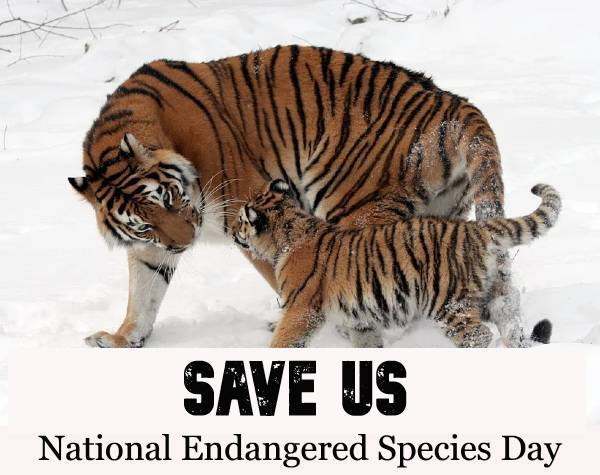 May 15th, 2020 – National Endangered Species Day: History, importance, and observance