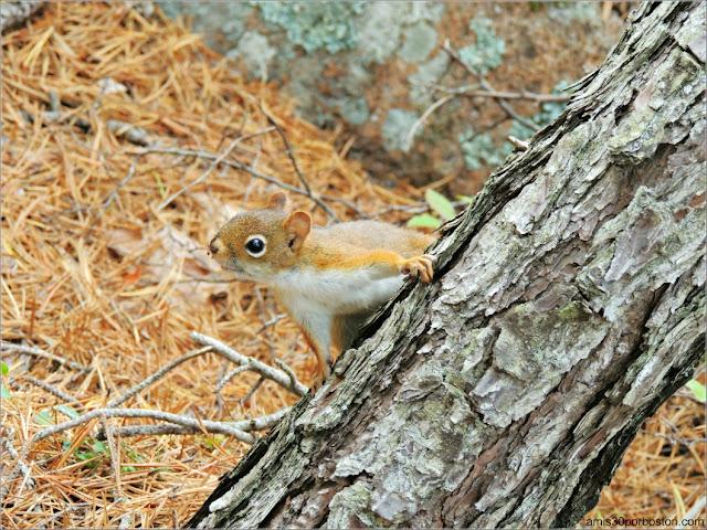 Fauna del Parque Nacional Acadia en Maine