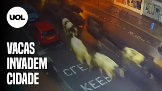 Meteoro na Bahia – Rebanho de vacas invade rua – Ciclone extratropical