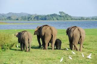 السياحة في سريلانكا و اهم 10 اماكن سياحية في سيريلانكا تسشتحق زيارتك 2020