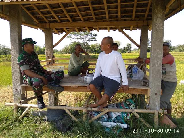 Jalin Keakraban, Babinsa Komsos Dengan Para Petani