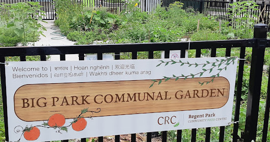 The CRC Community Gardens - Why Are They Important?