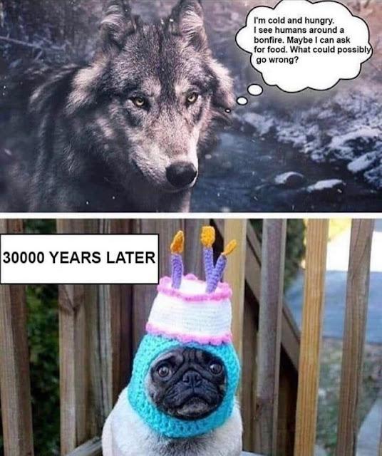 Evolution 100