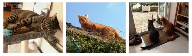 Cat calendar April to June