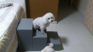 escadas ortopédicas para poodle
