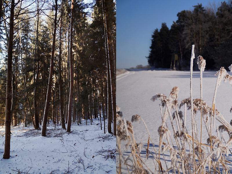 Natur und Wald im Winter bei Schnee | Tasteboykott