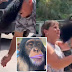Heartwarming reunion of a Chimpanzee with former caretakers who saved him as baby melt hearts online