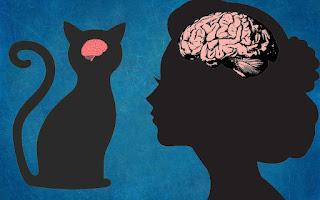 ¿Cómo se compara el cerebro de un gato con el cerebro humano?