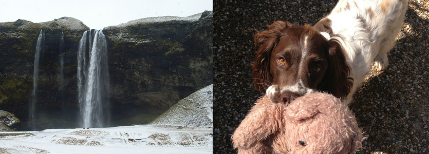 My time in Iceland and My lovely dog, Riff.