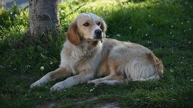 قصة عن الوفاء.. صور كلب ينتظر صديقة المريض 5 أيام أمام المستشفى
