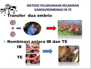 Bioteknologi di bidang peternakan