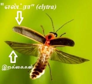 firefly - elytra