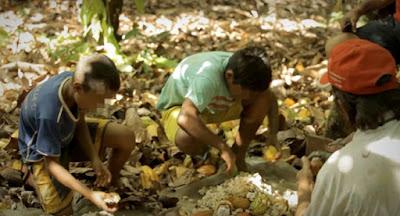 Crianças trabalhando com cacau