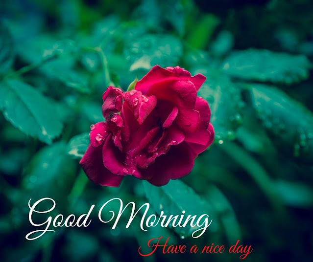 good morning photos with flowers