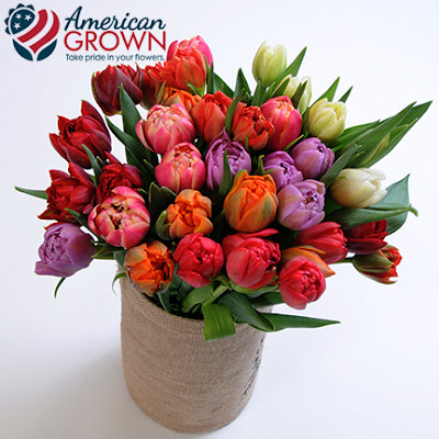 American Grown Tulips