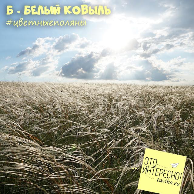 поле ковыля, Крым