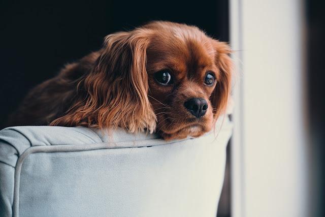 Homemade Dog Food Tips