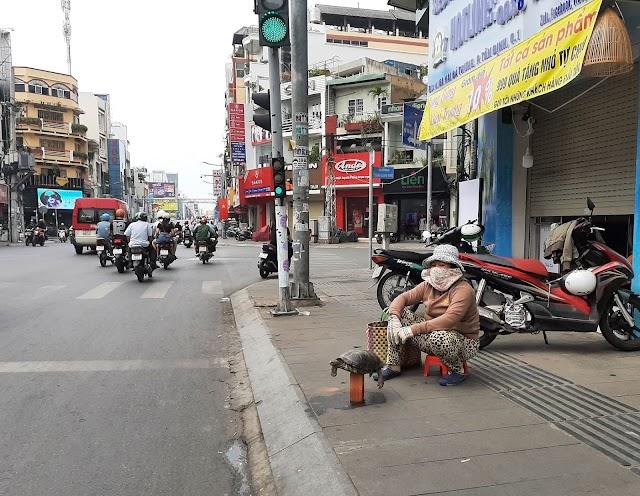 """Tội thân """"cụ"""" rùa phơi mình ở Sài Gòn"""