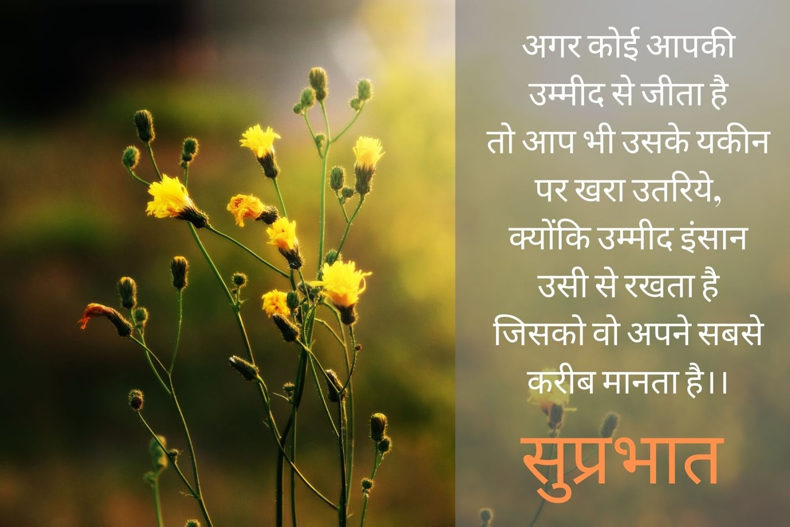 Best Good Morning Quotes, Message, And Wishes In Hindi