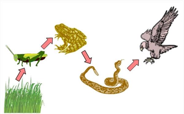 Ekosistem Sawah dan Berbagai Permasalahannya