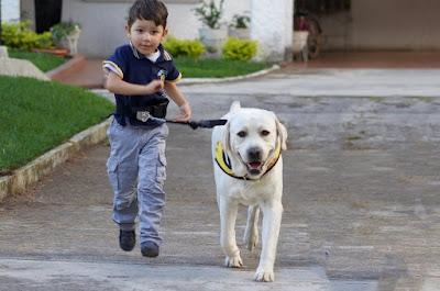 Importancia de los Animales de Asistencia para las Personas con Discapacidad