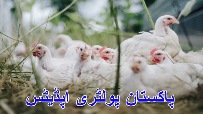 پاکستان پولٹری اپڈیٹ02-02-2020 Pakistan poultry updates