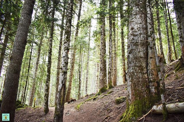 Bosque de Gerdar en la periferia del Parque Nacional de Aigüestortes