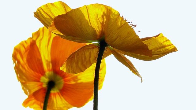 hoa hai quy y nghia