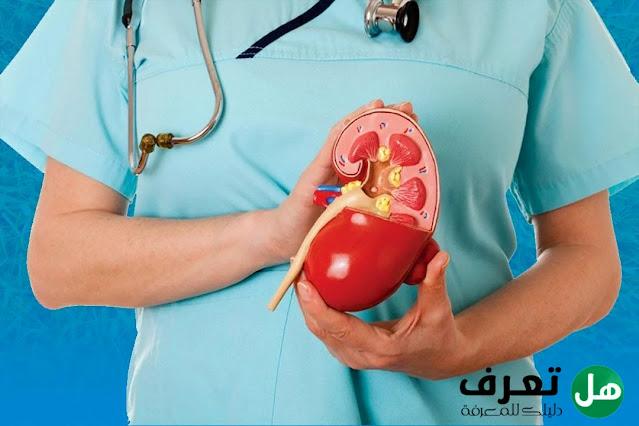 هل تعرف, ما هي أهم الأغذية التي تحافظ على صحة الكلى؟