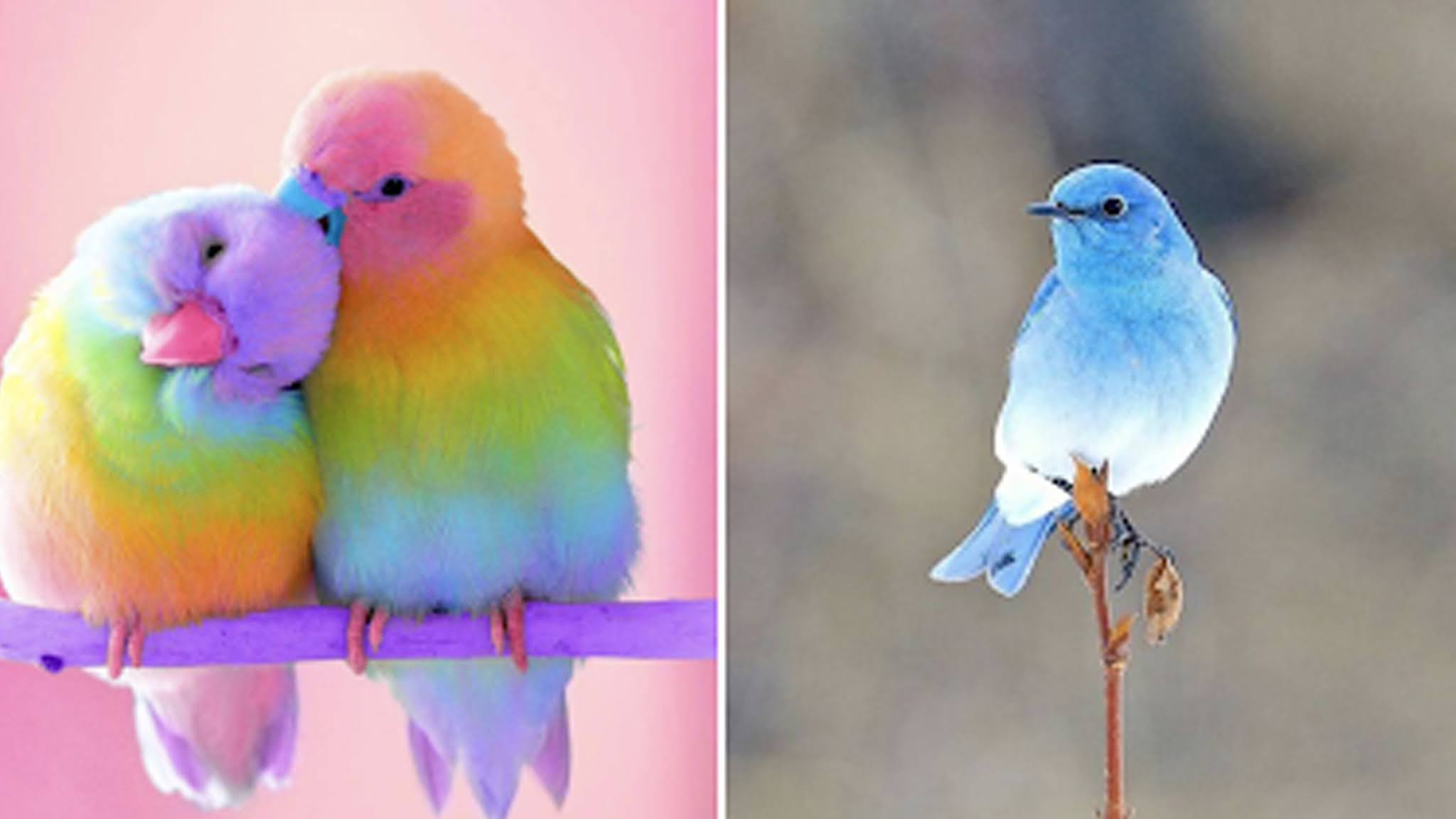 Would you like to see the most beautiful and glorious birds in the world?