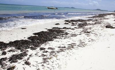 Seaweed Seychelles : fertilisant agricole à base d'algues marines