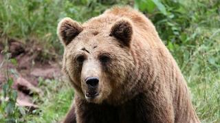Αρκούδα κρατούσε άνδρα για 30 μέρες στη φωλιά της – Σοκαριστική η εικόνα του