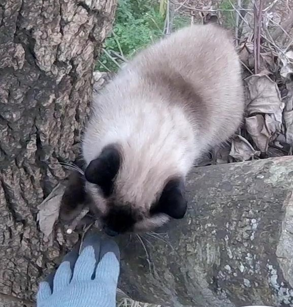 Cat Stuck in a Tree?: Buttons