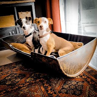 panier métal pour petit chien