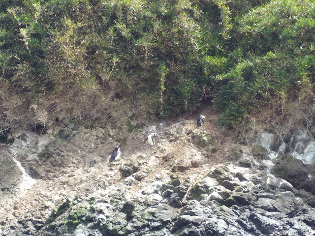 Islotes de Puñihuil, Isla Grande de Chiloé, Chile