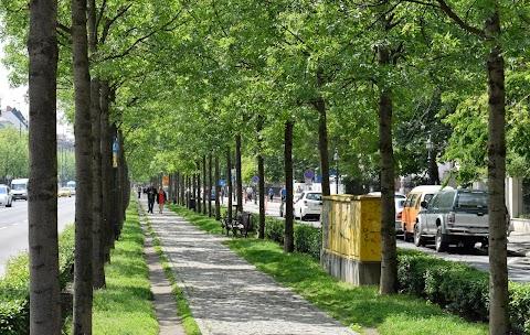 A Főkert már megkezdte a szakmai egyeztetést az Andrássy úti fák megóvásáért