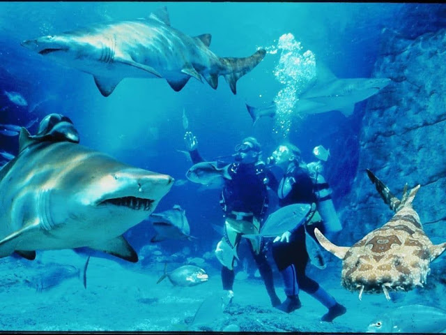 Feel the Sensation of Diving Experience with Marine Life at Melbourne Aquarium