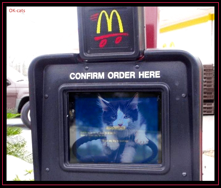 "Funny Photoshopped Cat picture • ""One giant cheeseburger with catnip, hurry up!"" CONFIRM ODER HERE"
